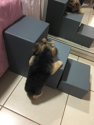 rampas para cães pequenos