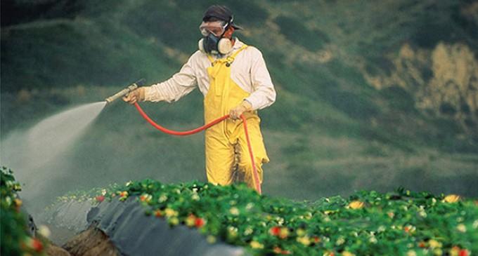 O uso do glifosato na agricultura