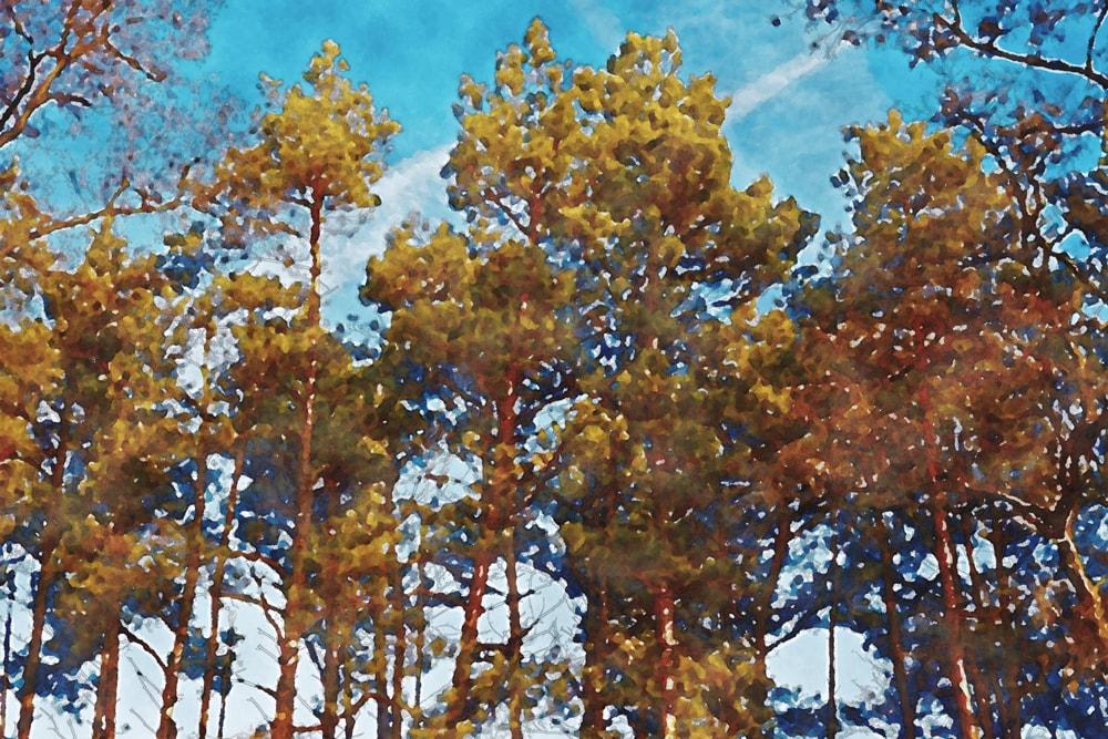 水彩画の紅葉の木々