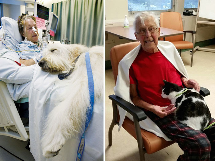 40 Times 2016 Restored Our Faith In Humanity - Hospital Lets Pets Visit Their Sick Humans To Make Them Feel Better