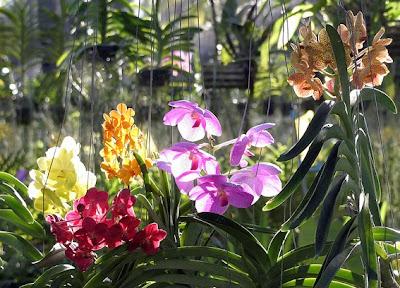 Orchid Nursery in Phuket