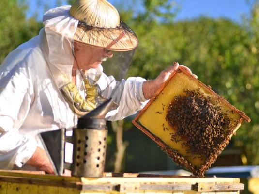 Μην γίνεις γιε μου μελισσάς…