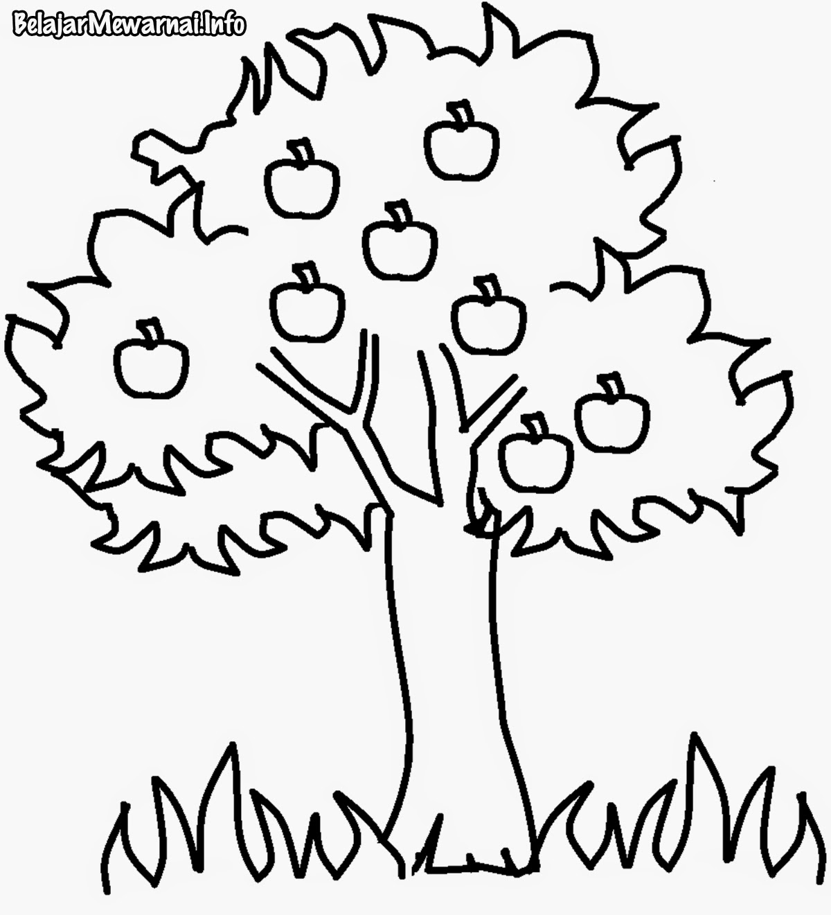Gambar Mewarnai Pohon Terbaik Gambar Mewarnai Lucu
