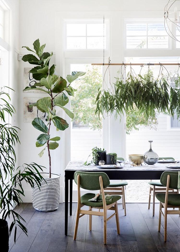 my scandinavian home The Ultimate Guide to Indoor Hanging Plants