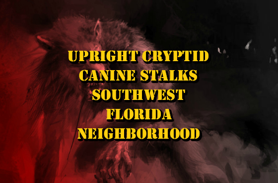 Upright Cryptid Canine Stalks Southwest Florida Neighborhood