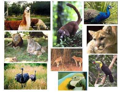 Zoologia e Zoonose