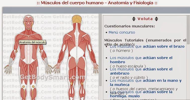biologia2bachcamp: 3º ESO. TEMA 2. EL CUERPO HUMANO