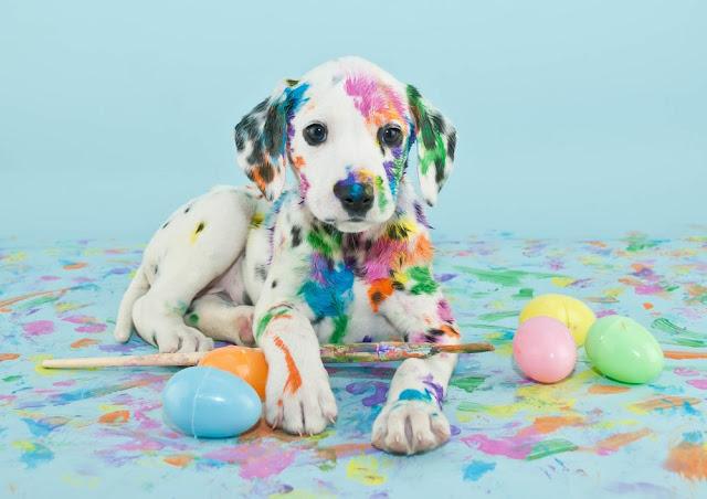 Chó có thật sự bị mù màu?