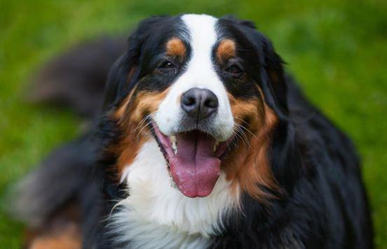 Companion Animal Psychology: Happy Dogs: Photos - photo#45