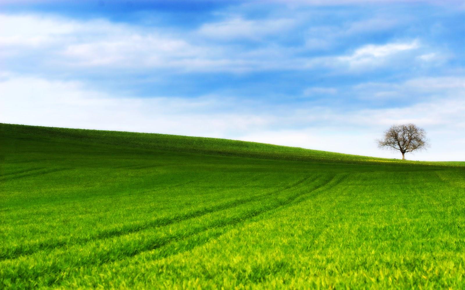 119 do bom pastor a boa palavra o prazeroso pasto - Open field wallpaper ...