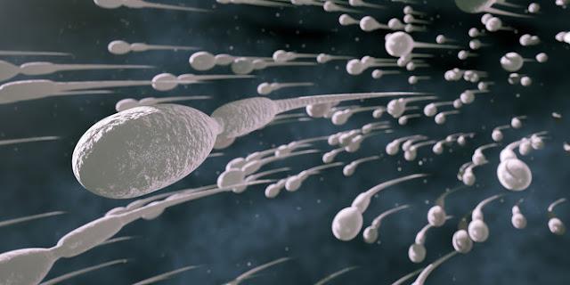 herbal bee untuk sperma encer