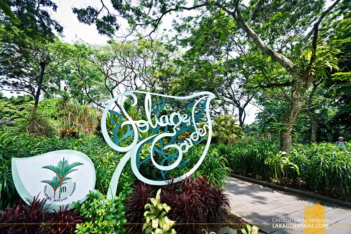 Singapore Botanic Gardens Foliage Garden