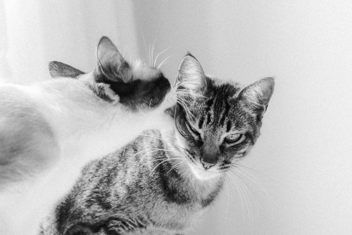 sobre amores (e felinos) / blog coffee & flowers