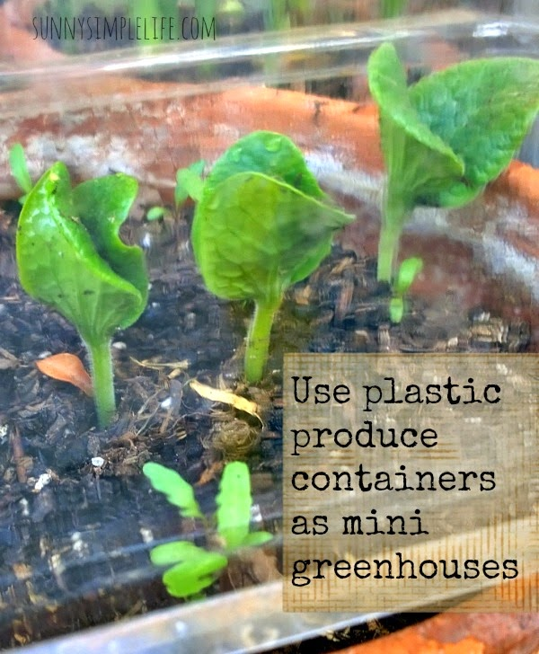 Plastic containers to cover seedlings