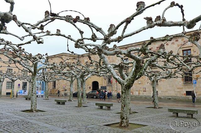 Palacio de los Condes de Alba y Aliste, plaza Viriato, Zamora