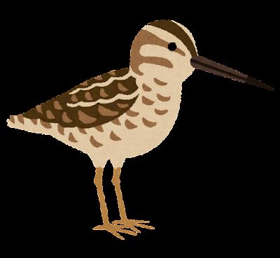 タシギのイラスト(鳥)