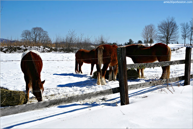 Caballos en New Hampshire