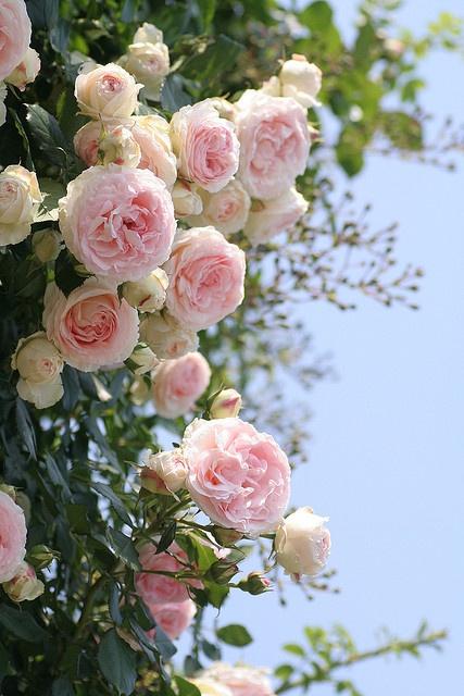 Lamb & Blonde: My Dream Garden