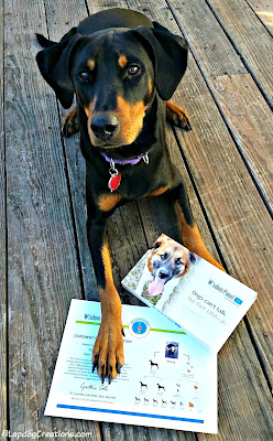doberman mix rescue dog wisdom panel dna