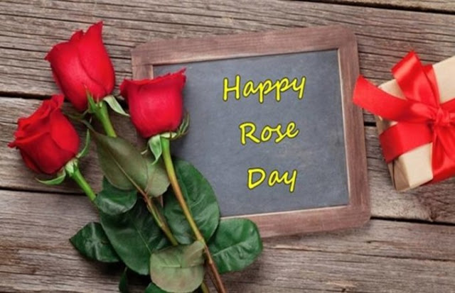 rose day,happy rose day,rose day status,rose day whatsapp status,happy rose day status,rose day special,rose day shayari,rose day video,rose day 2019,rose day status video,7 february rose day,rose day special status,7 february happy rose day,valentine day,rose day quotes,rose day song,rose day greetings,rose day 7 february 2019,rose day 7 february 2018,happy rose day whatsapp status, rose day,happy rose day,happy rose day images,rose day wishes,rose day whatsapp status,rose day image,happy rose day wishes,rose day images,7th february rose day,rose day video,rose day kab hai,happy rose day shayari,rose day quotes,when is rose day,happy rose day 2018,rose day status,rose day sms,rose day greetings,rose day videos,how to celebrate rose day,rose day special