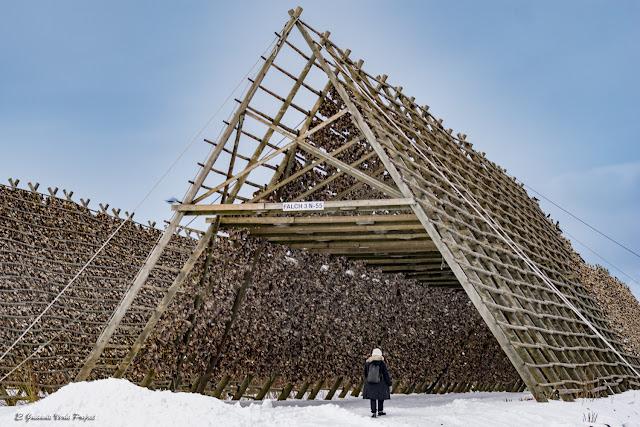 Secadero de Skrei, Islas Lofoten - Noruega por El Guisante Verde Project