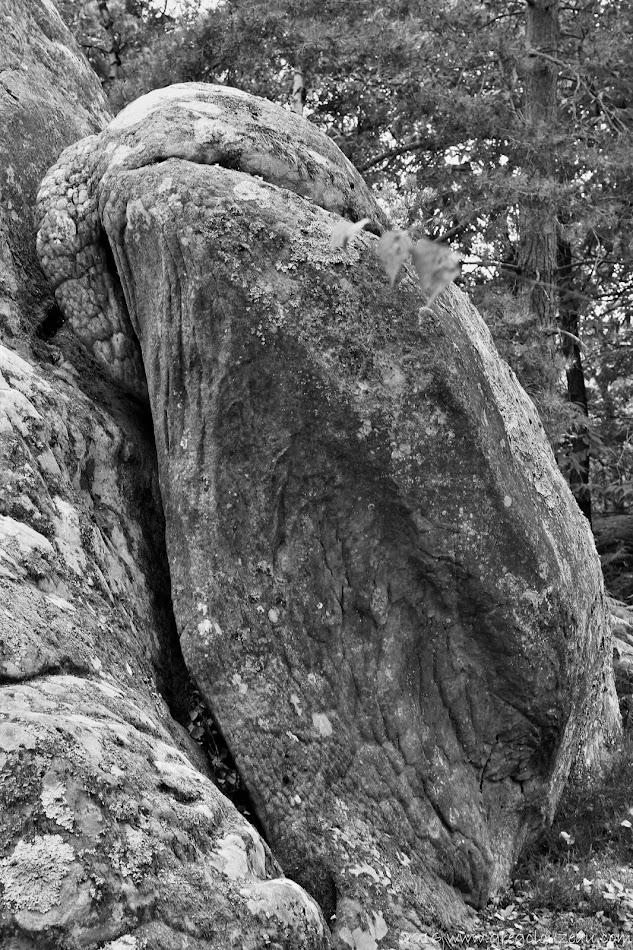 L'aigle du Rocher du Général, (Trois Pignons, (C) 2016 Greg Clouzeau