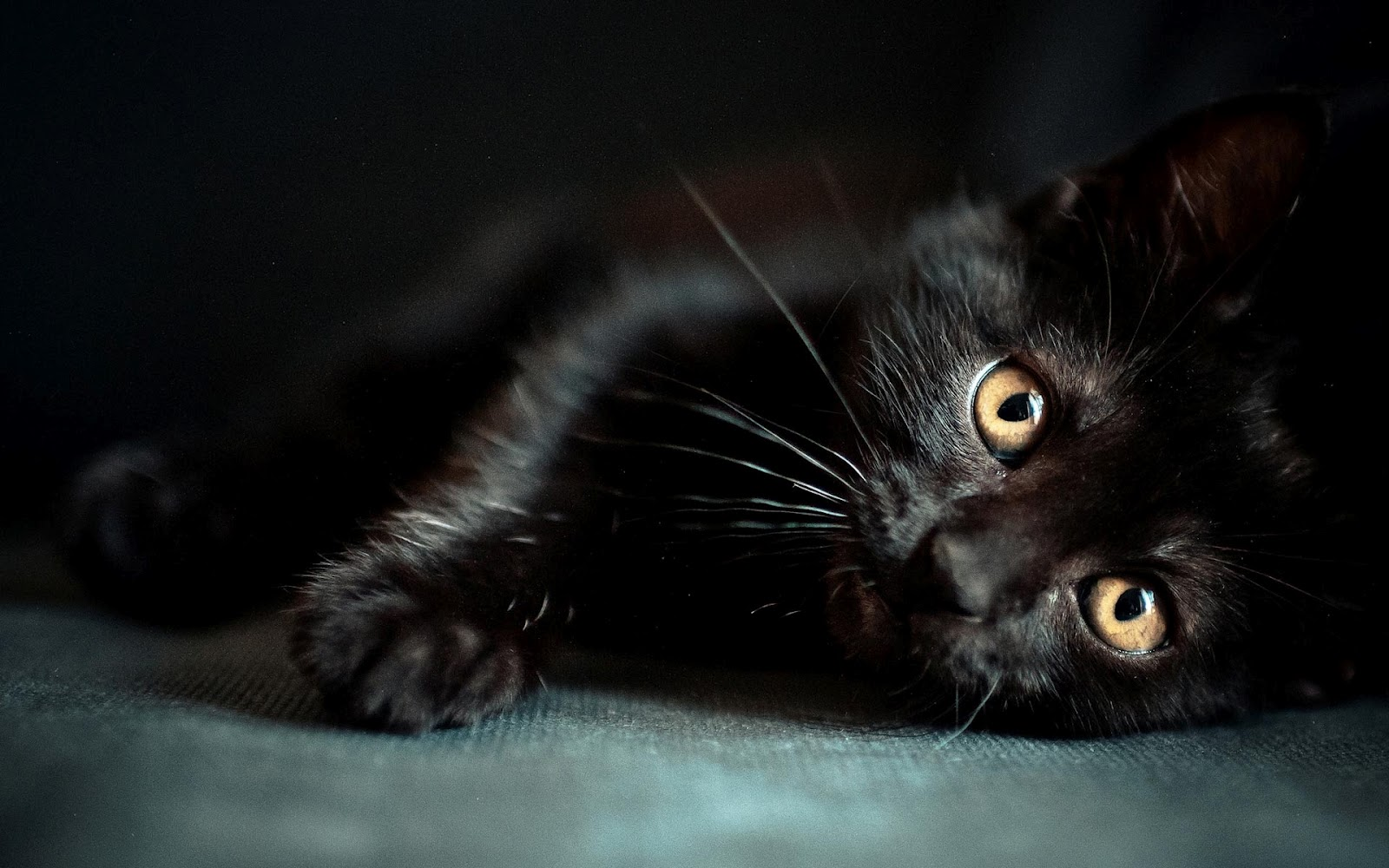 Images for black cat wallpapers - Free wallpaper of kittens ...