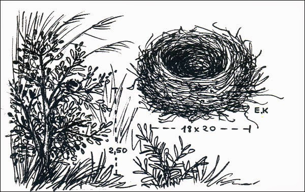 nido de Batará