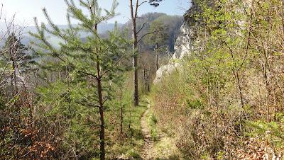 Roti-Flue-Trail