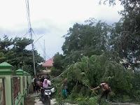 Angin Sore Menumbangkan Pohon IAIN Antasari
