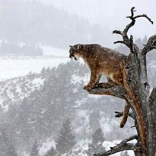 Neve montagna tragedia Rigopiano Ghotam territorio italia Fiorella Messina-FB- la santa furiosa