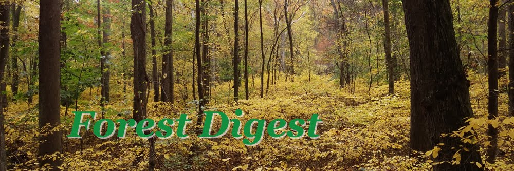 Forest Digest