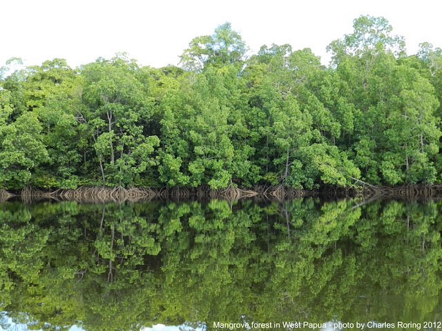 Guided Rainforest Tour with Charles Roring
