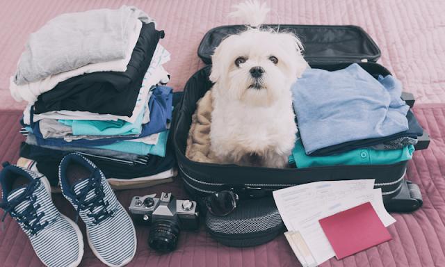 Viagem com cachorro para Miami