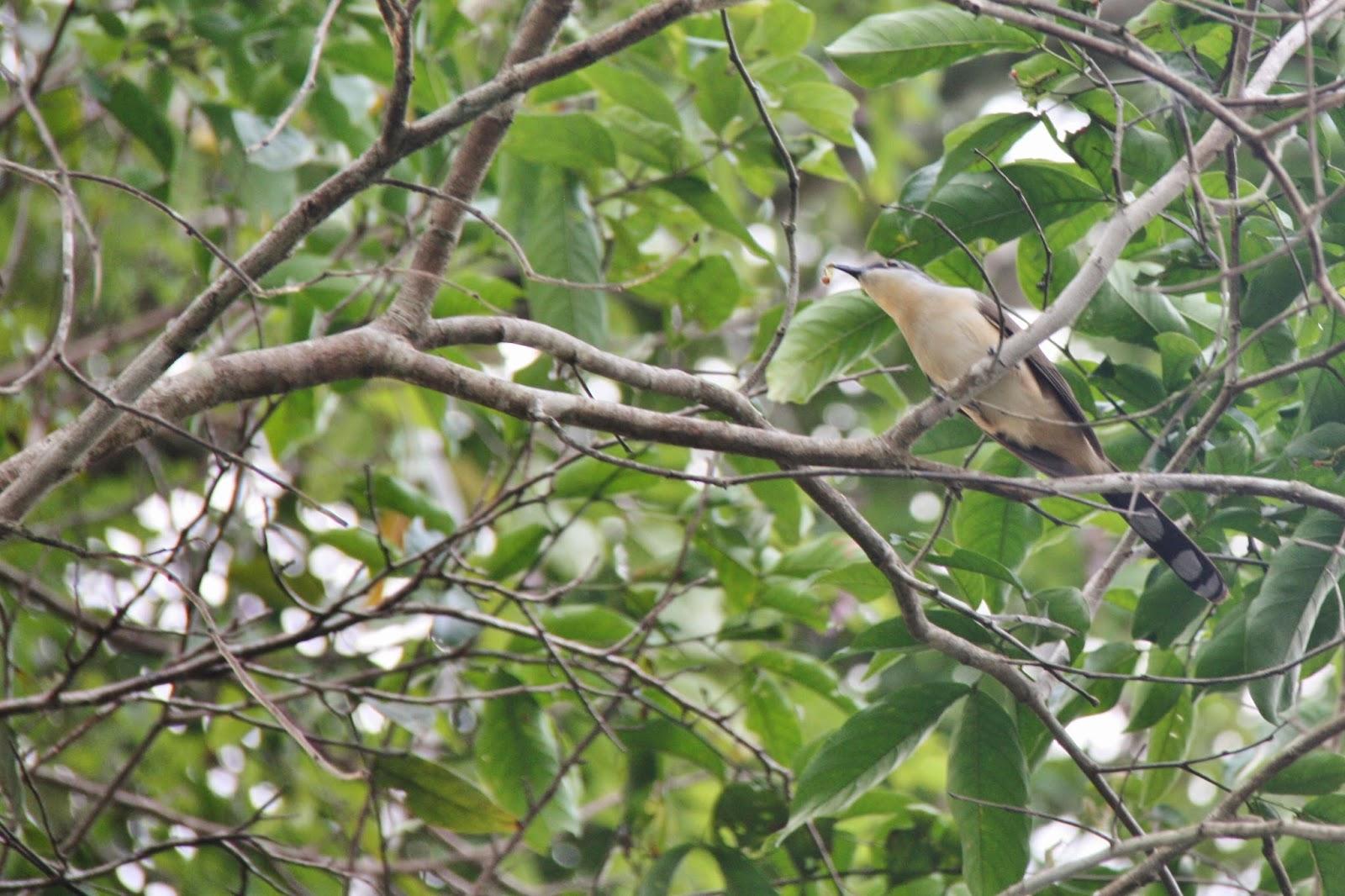 Pássaro amazônico.