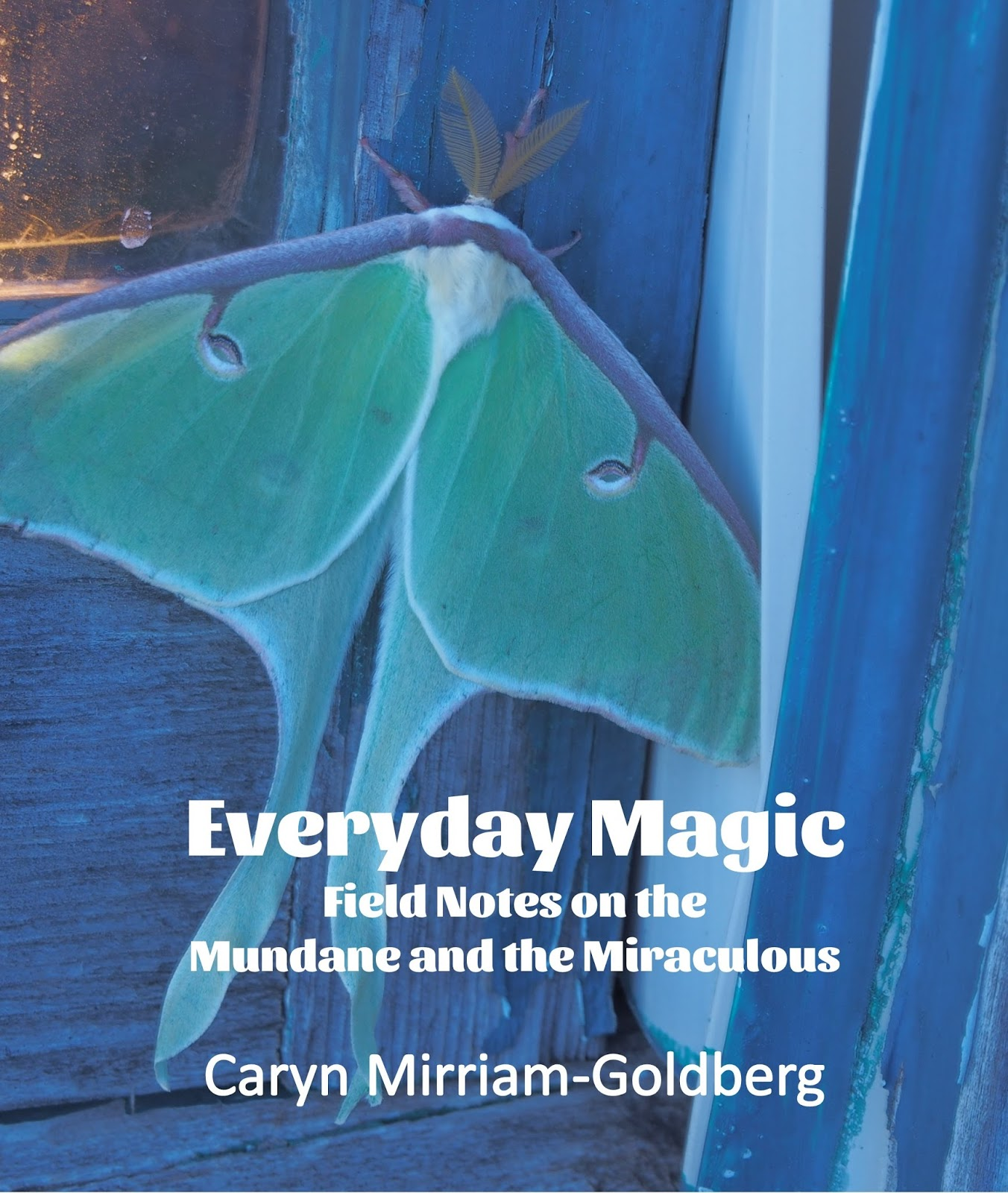 Meadowlark: Everyday Magic: Field Notes on the Mundane and the ...
