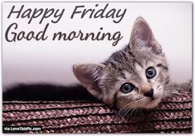 happy-firday-good-morning-cat-pictures