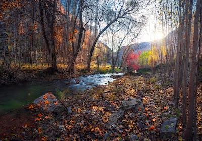 Río precioso atravesando el bosque con sol y montañas de fondo