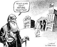 darwinismo ed economia