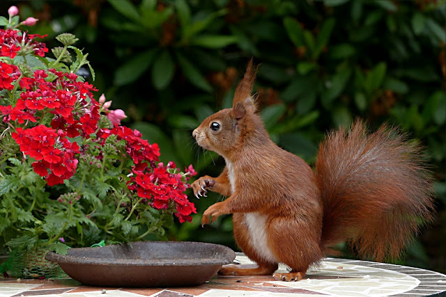 Squirrel Looking At the flower HD Wallpaper