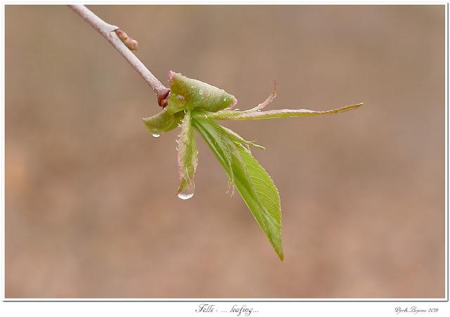 Fells: ... leafing...