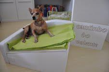 cama inclinada para cães com megaesôfago