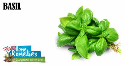 Home Remedies For Ear Infections: Basil