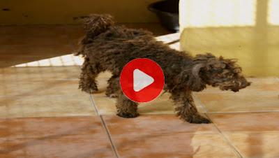 Los mejores momentos del programa sobre tráfico ilegal de perros en Cuatro