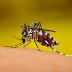 Pesquisa indica que vírus Zika cura tumor avançado no sistema nervoso