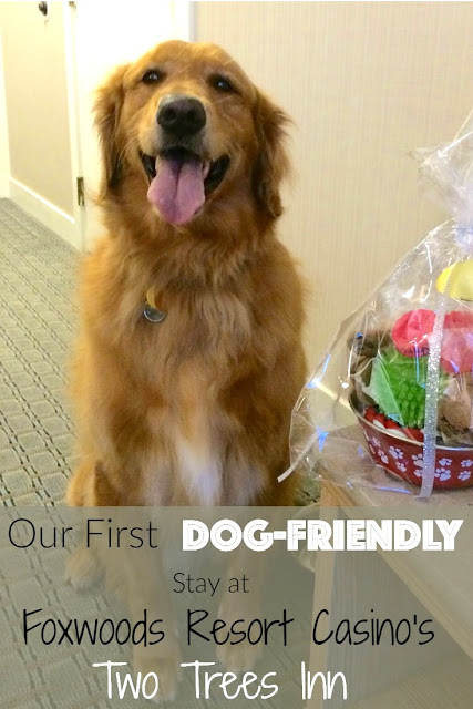 dog friendly hotel at Foxwoods Casino