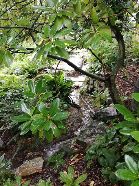 Water Garden, ogród w cieniu, strumień w ogrodzie
