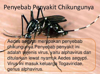 https://mustahabbah.blogspot.com/2017/07/chikungunya-gejala-penyebab-dan.html