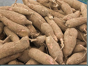 Agric College partners foreign investor on cassava production enterprise 3