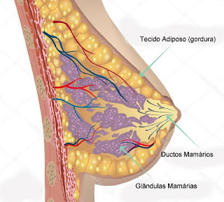Fazer Musculação diminuem os seios - Glândulas Mamárias